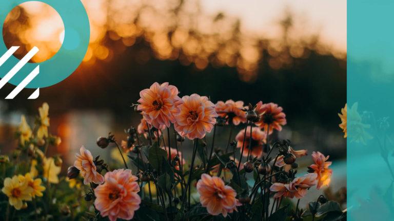 आप भी फूलों पौधों की पहचान झट से कर सकते है